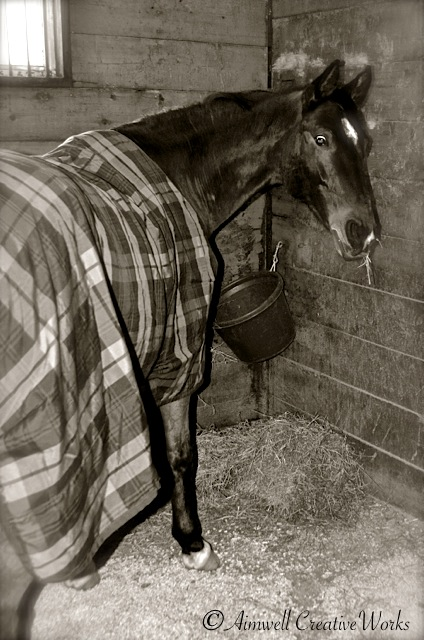 Bear, snuggly in his winter blanket, hangs out in his warm stall with ample hay.