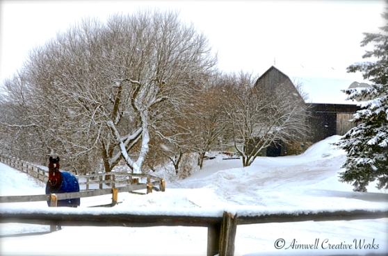 The lane to the pond lies to the left of the bank barn. A snow bank blocks the way. Jerome is in the paddock. This image taken in January.