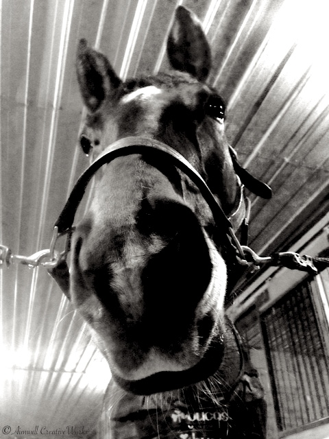 The Long Face